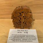 Oak Birthday Tree 10th June – 7th July