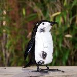 Recycled penguin chick
